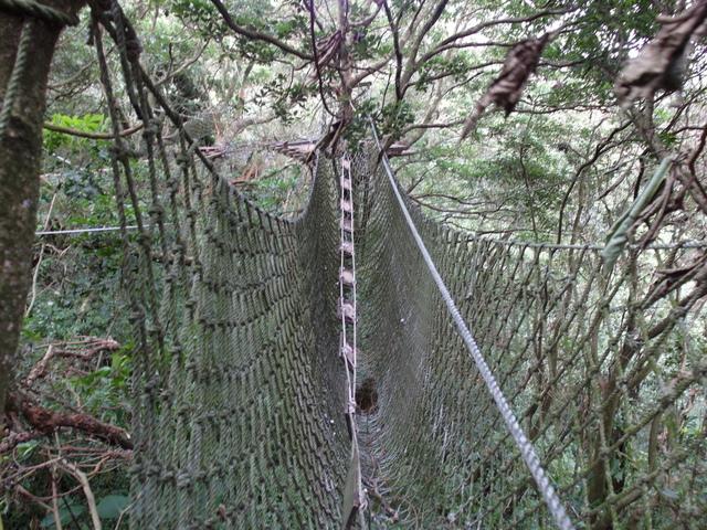 竹子湖步道  (99).JPG