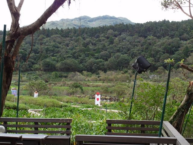 竹子湖步道  (109).JPG