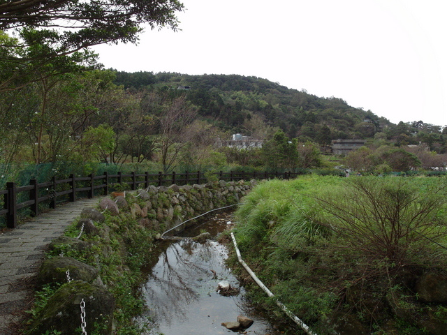 竹子湖步道  (110).JPG