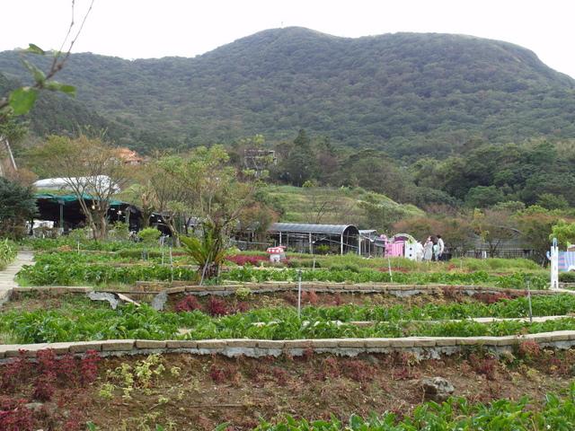 竹子湖步道  (111).JPG
