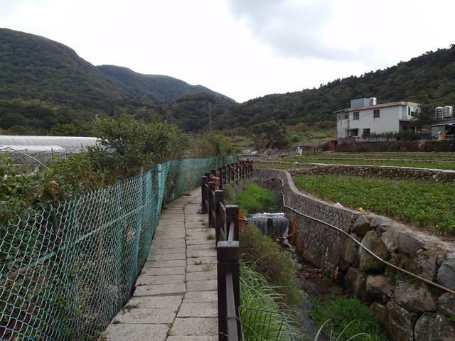 竹子湖步道  (114).JPG