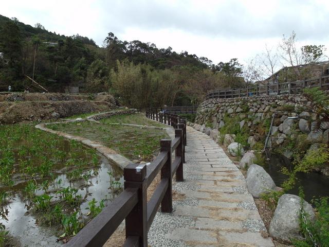 竹子湖步道  (121).JPG