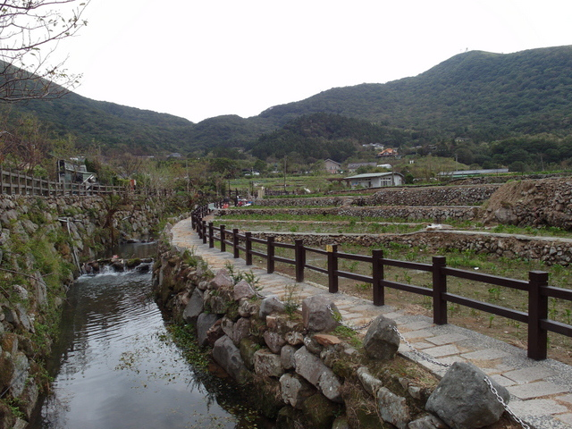 竹子湖步道  (123).JPG