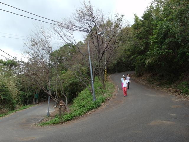 竹子湖步道  (134).JPG