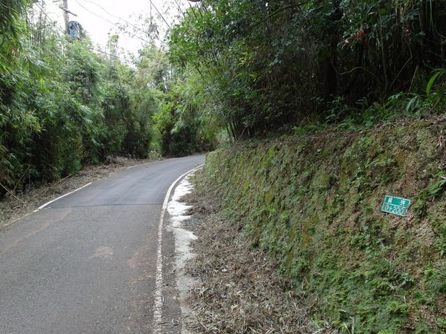竹子湖步道  (135).JPG