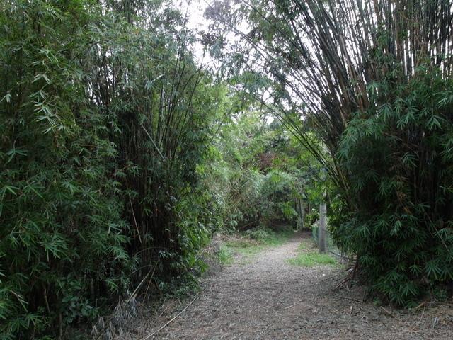 竹子湖步道  (136).JPG