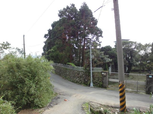 竹子湖步道  (178).JPG