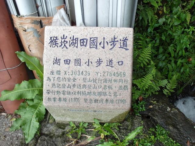 竹子湖步道  (184).JPG