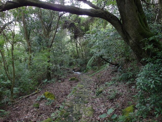 竹子湖步道  (188).JPG