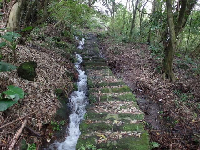 竹子湖步道  (190).JPG