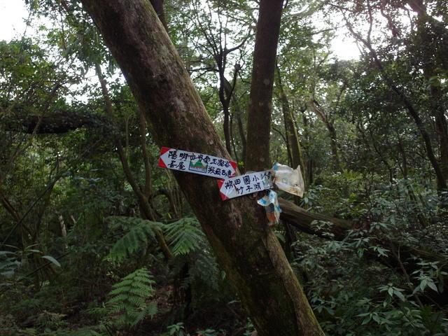 竹子湖步道  (193).JPG