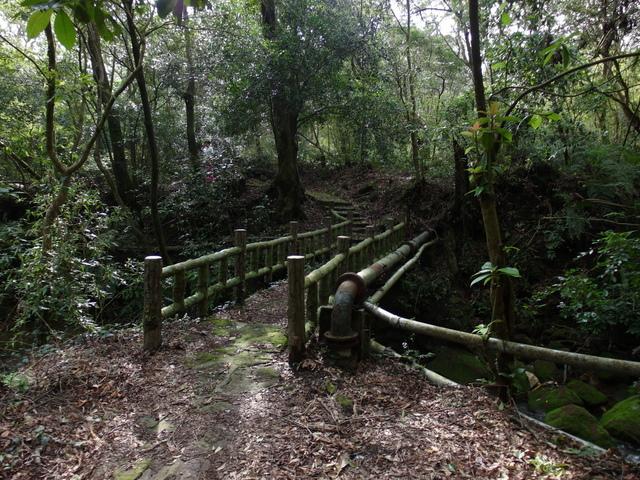 竹子湖步道  (195).JPG