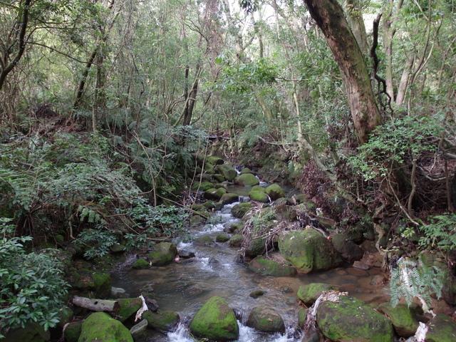 竹子湖步道  (196).JPG