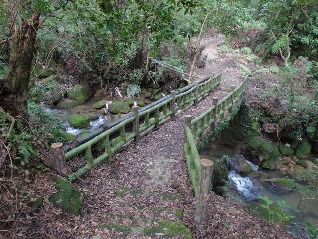 竹子湖步道  (198).JPG