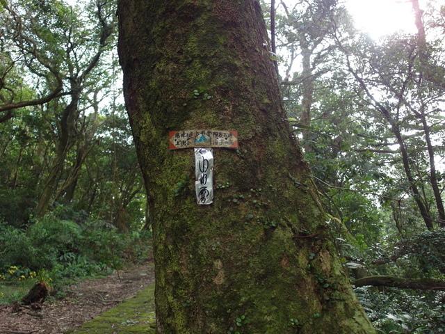 竹子湖步道  (200).JPG
