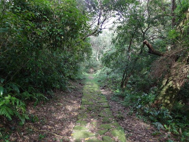 竹子湖步道  (202).JPG