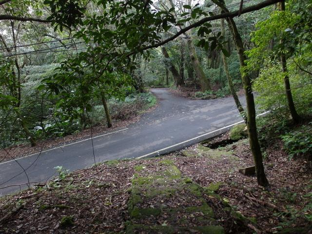 竹子湖步道  (203).JPG