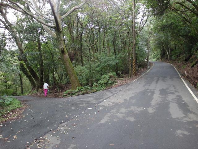 竹子湖步道  (206).JPG