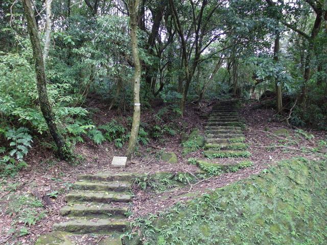 竹子湖步道  (207).JPG