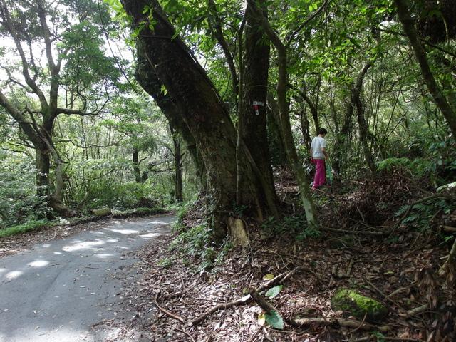 竹子湖步道  (209).JPG