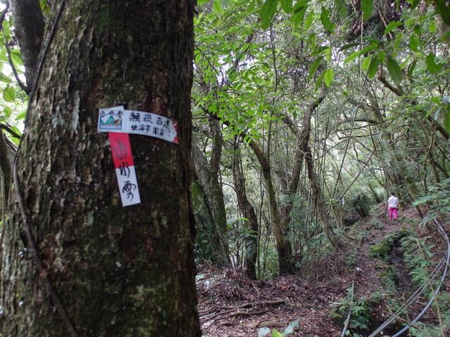 竹子湖步道  (210).JPG