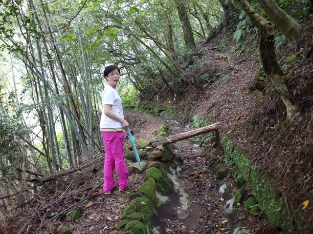 竹子湖步道  (221).JPG