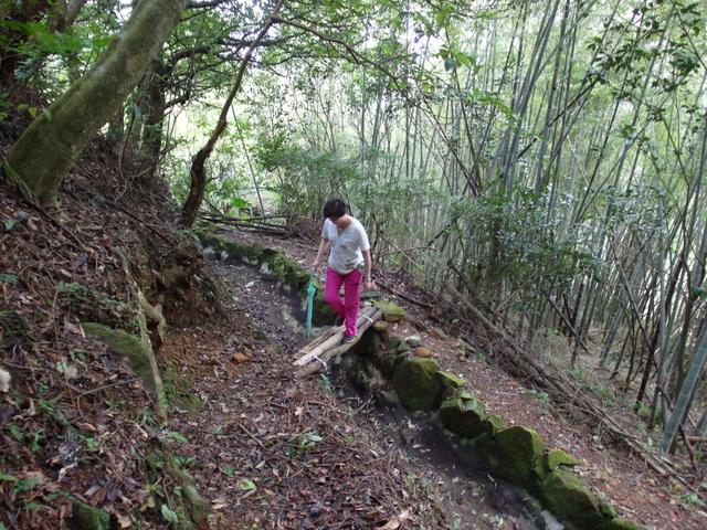 竹子湖步道  (223).JPG