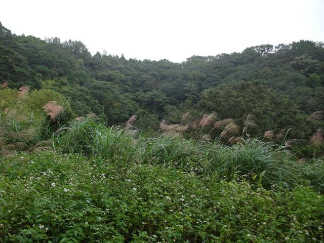 竹子湖步道  (225).JPG