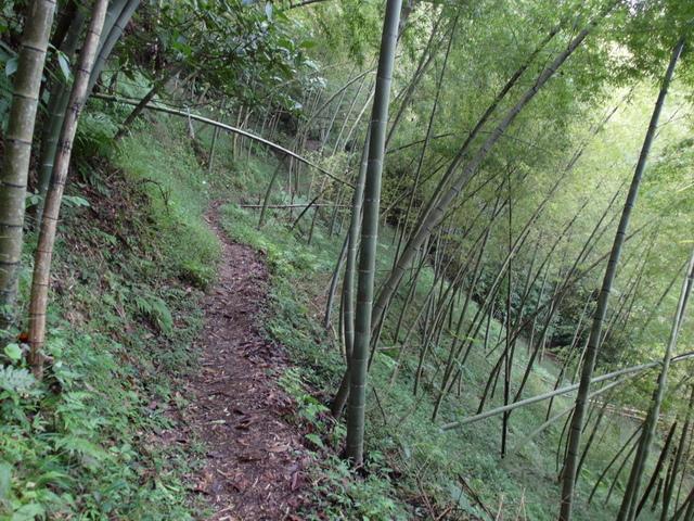 竹子湖步道  (226).JPG