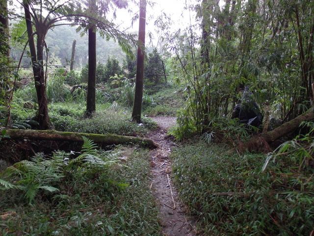 竹子湖步道  (227).JPG