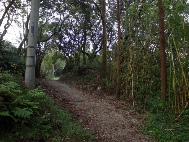 竹子湖步道  (228).JPG