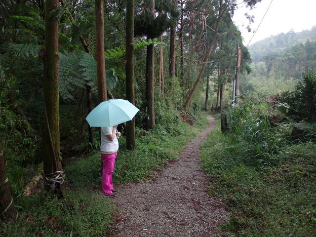 竹子湖步道  (229).JPG