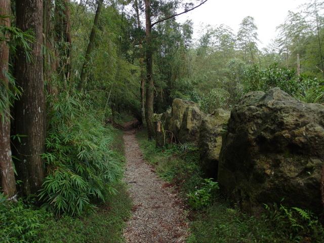 竹子湖步道  (230).JPG
