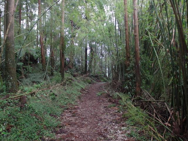 竹子湖步道  (231).JPG