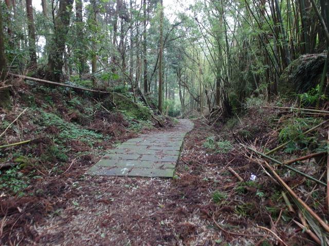 竹子湖步道  (232).JPG