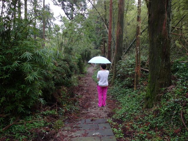竹子湖步道  (233).JPG