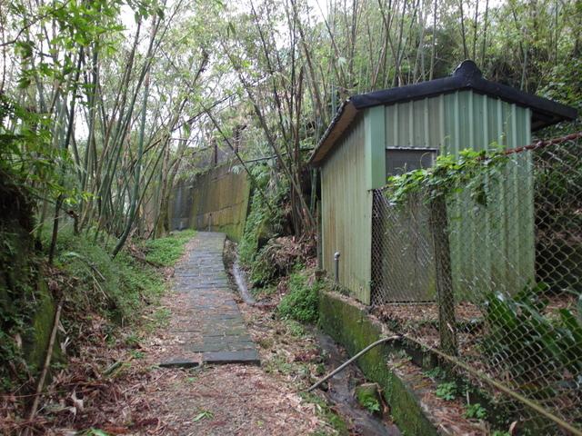 竹子湖步道  (234).JPG