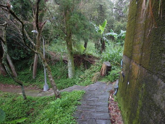 竹子湖步道  (235).JPG