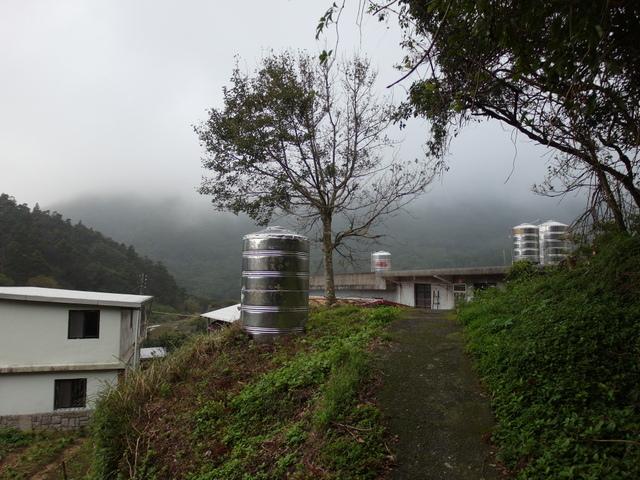 竹子湖步道  (236).JPG