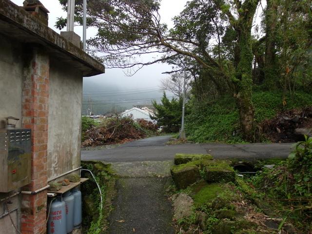 竹子湖步道  (238).JPG