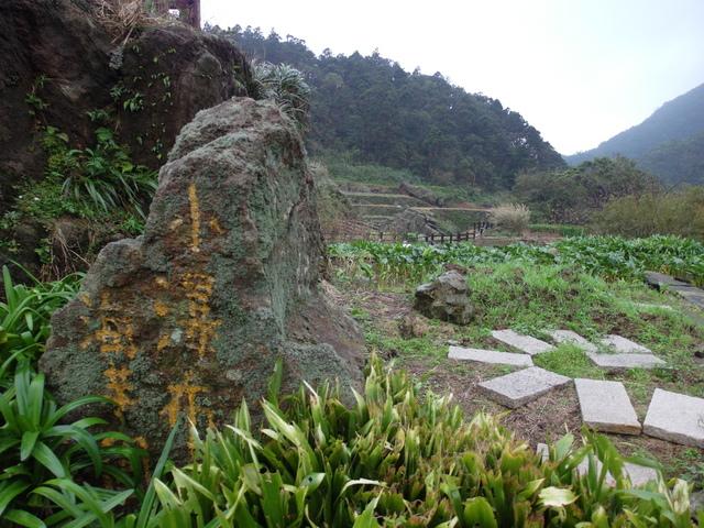 竹子湖步道  (243).JPG