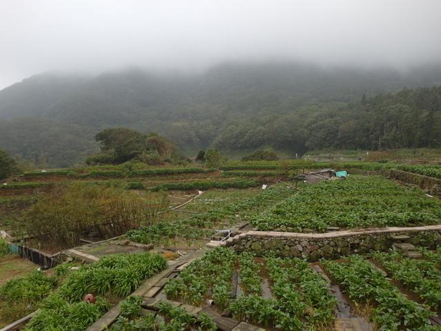 竹子湖步道  (244).JPG