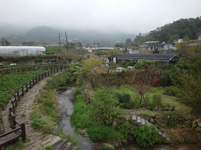竹子湖步道  (246).JPG