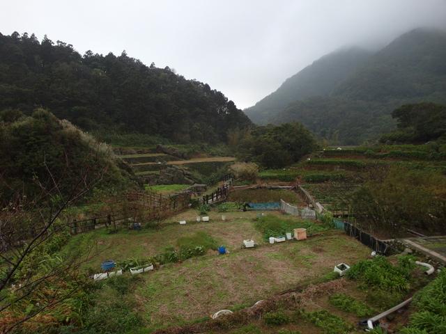 竹子湖步道  (247).JPG