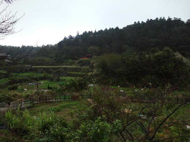 竹子湖步道  (248).JPG