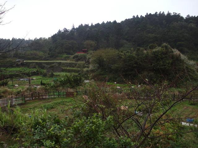 竹子湖步道  (249).JPG