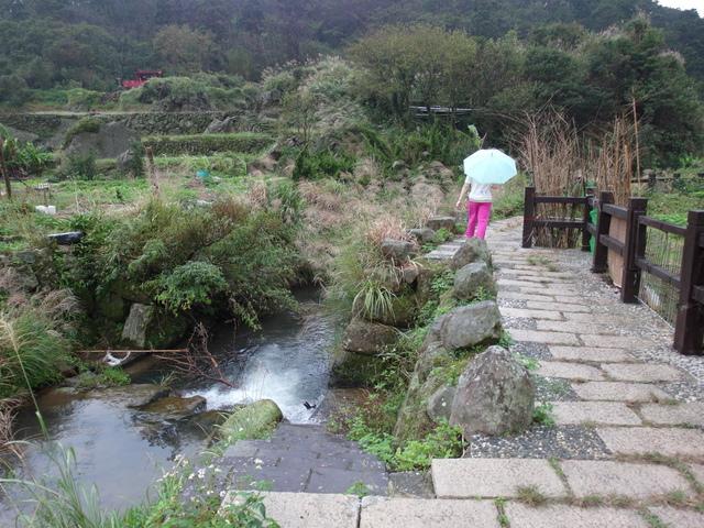 竹子湖步道  (250).JPG