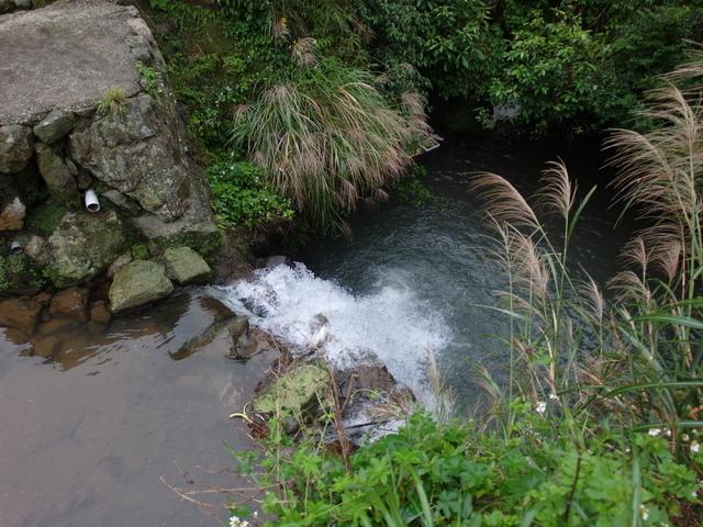 竹子湖步道  (252).JPG