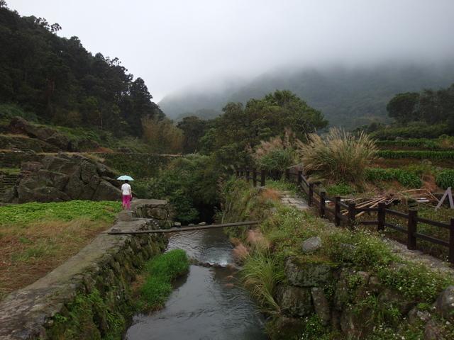 竹子湖步道  (253).JPG