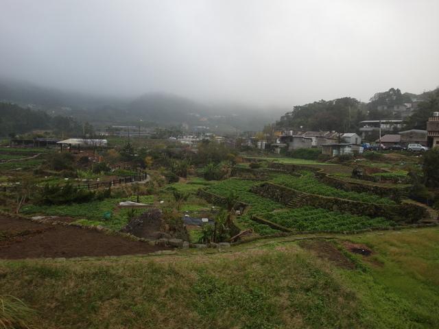 竹子湖步道  (259).JPG